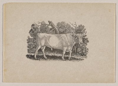 standing bull with small horns in profile from PR, with head turned toward picture plane; foliage behind bull