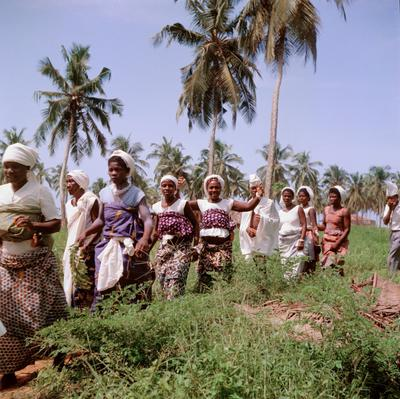 Color image of a group of woman walking in a line through short brush with palm trees in the backtground; one woman smiles and holds her arms up