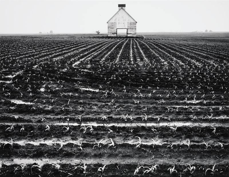 field of young corn, barn in center background, doors open and horizon visible through doors
