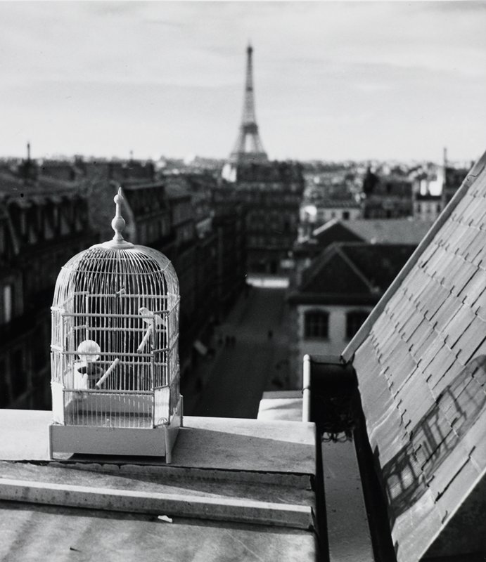 bird in a birdcage on a roof ledge; view of rooftops over Paris with Eiffel Tower in background