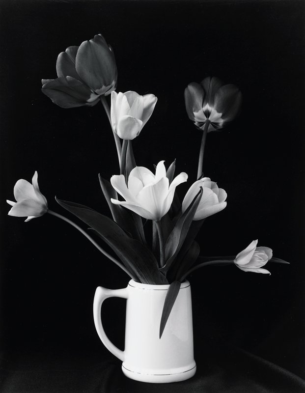 two red and five white tulips in a white stein which has two decorative lines, one around base and one at top