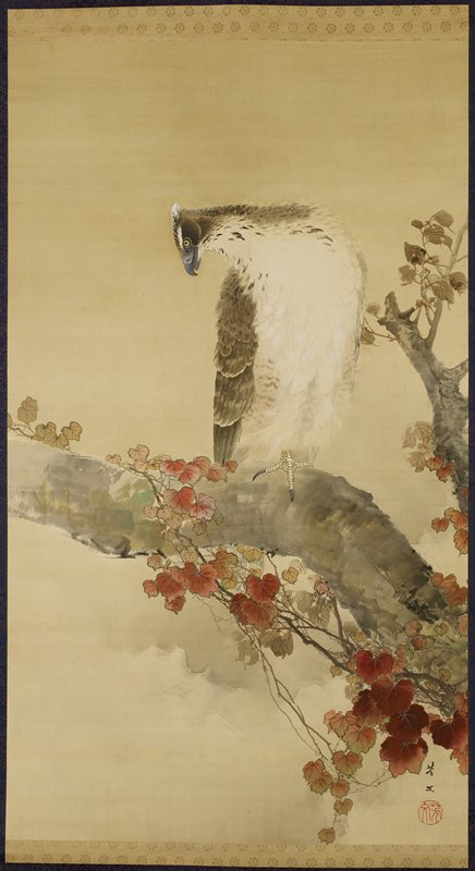 brown and white eagle with grey beak perched on a thick branch; vines with red leaves twisted around branch