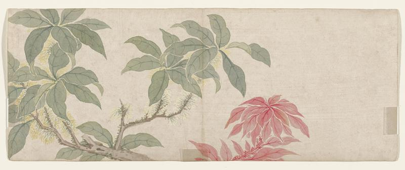 leaf from a small album of flower paintings; poinsetta-like flower at bottom center; branch with green leaves and white buds (?) along stem at left