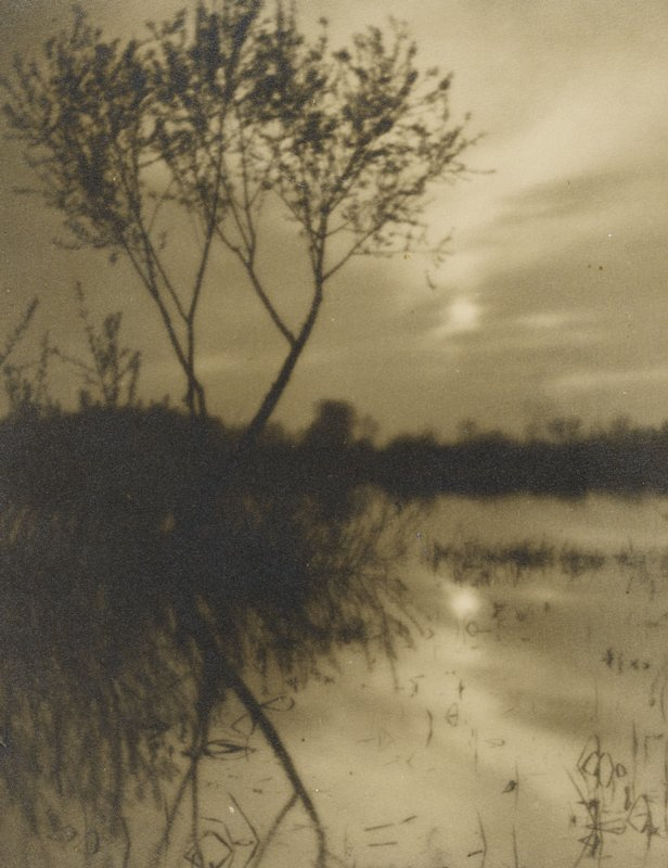 soft-focus, dimly lit scene with silhouette of tree at left background; water in right foreground