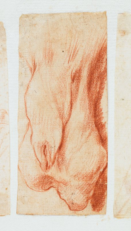 study of male animal's genitals, in red chalk; labeled on sheet in blue ink: H.83; mounted on sheet with 3 other small drawings--further drawings have been removed; other drawings present are labeled on the sheet in blue ink: H.82, H.84, H.85; see also L2009.52.67a,c,d