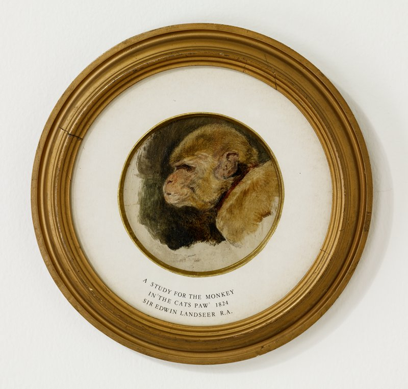 head in profile from PL side of monkey with light tan fur, wearing a red collar; brownish-green background with white at bottom and left; received framed in round format