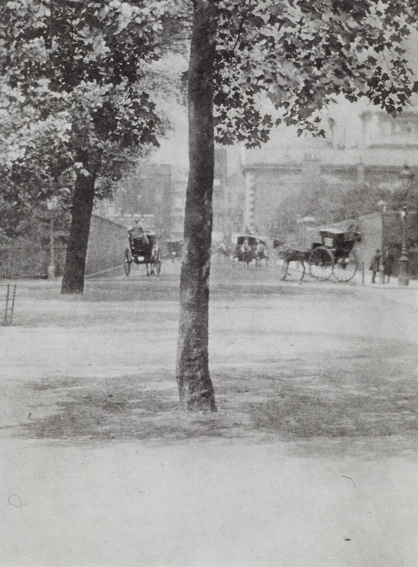 streetscape with numerous horse drawn buggies and a tree in foreground at center