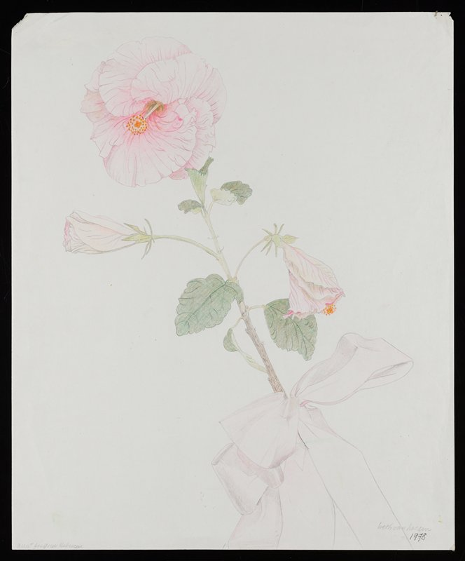 one stem of pink hibiscus with one large flower in ULQ and two blossoms; pink ribbon bow around stem, LRQ
