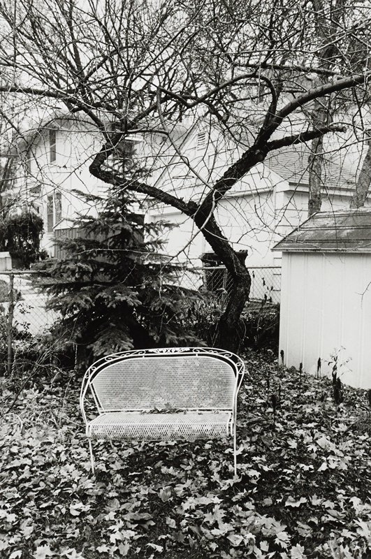 white wire bench in a backyard in the fall, with fallen leaves on ground; bare tree and small evergreen behind bench; small outbuilding at right; house, garage and fence behind trees