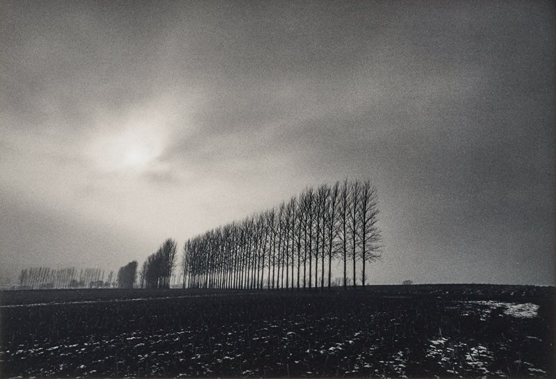 row of bare trees with straight trunks at center, with other rows of trees at left; dark filed in foreground; cloudy sky