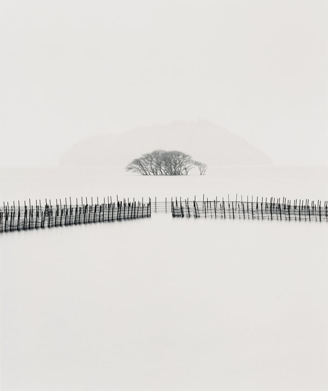 snowy barren landscape with silhouettes of fences at middle of image; silhouettes of cluster of bare trees at center middle ground; misty hill at center background on horizon line