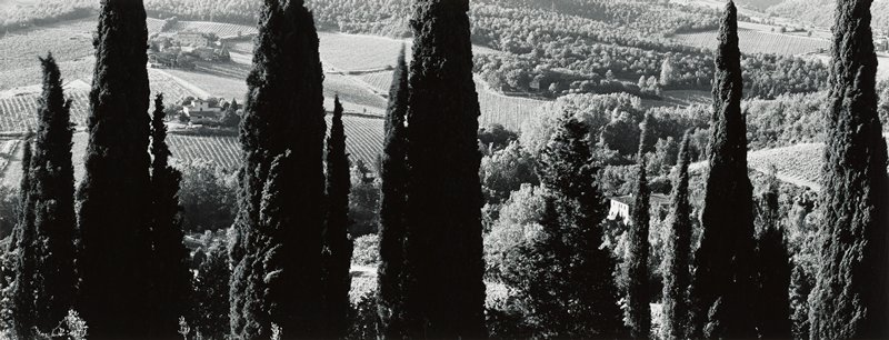 view downward of farm fields and houses with poplar trees in foreground