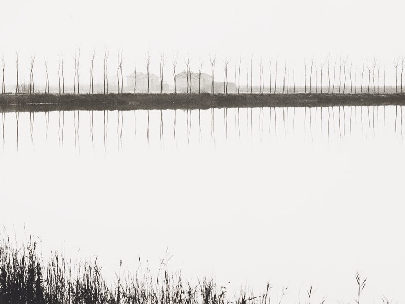 water (appearing white) at center; tops of grasses at bottom in foreground; reflections of thin, straight bare trees on opposite bank; buildings behind trees