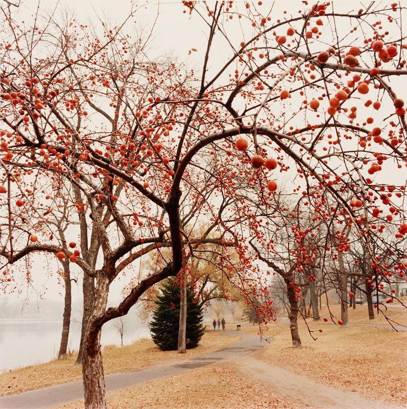 fall scene; leafless tree in foreground with red berries; lake at left; three figures walking on paved path in middle ground, center