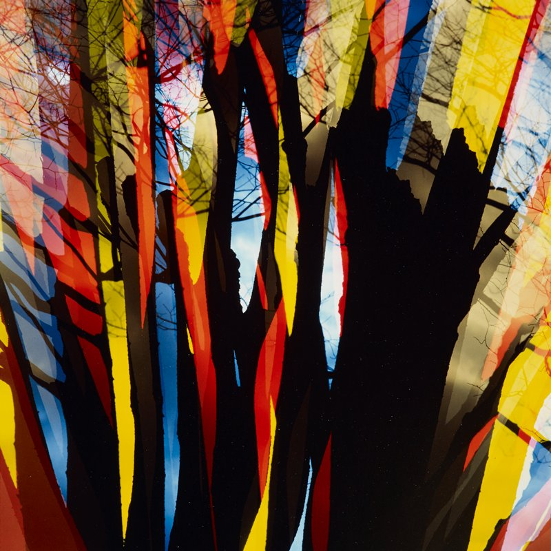 abstracted image of tree limbs and trunk with radiating colors