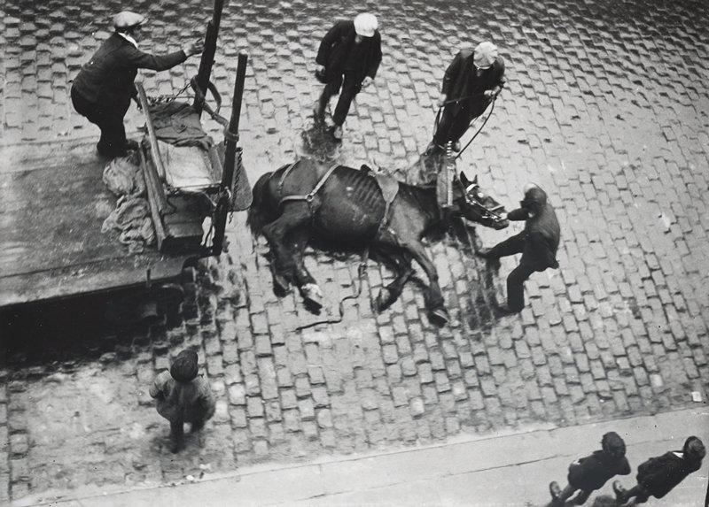 view of horse lying on a brick street in front of a cart, seen from above; three figures stand around horse; man on cart; another figure in LLC; two boys on sidewalk, LRC