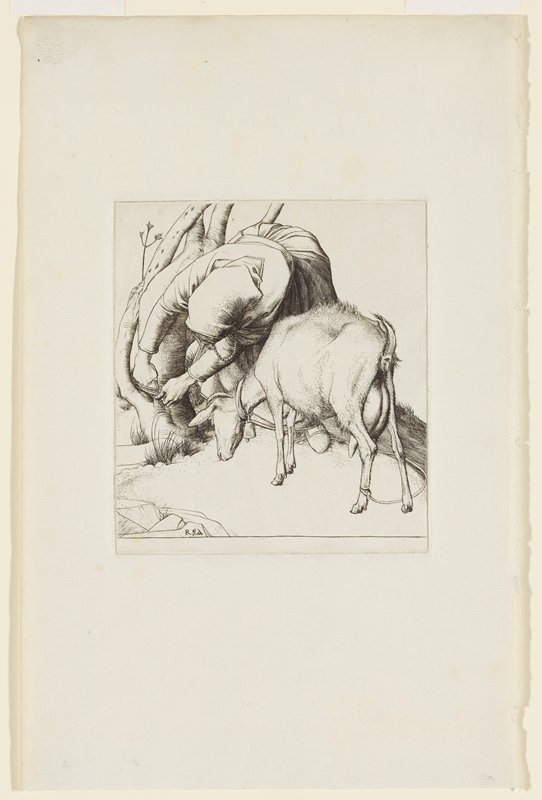 front view of woman leaning over to tie her goat to a tree trunk; face hidden from view; goat behind woman's PL side grazing on grass