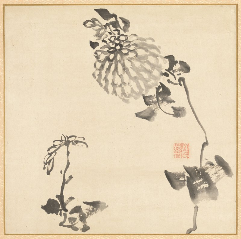 ink drawing of chrysanthemums; larger fully blossomed chrysanthemum at R; shorter partial blossom LL