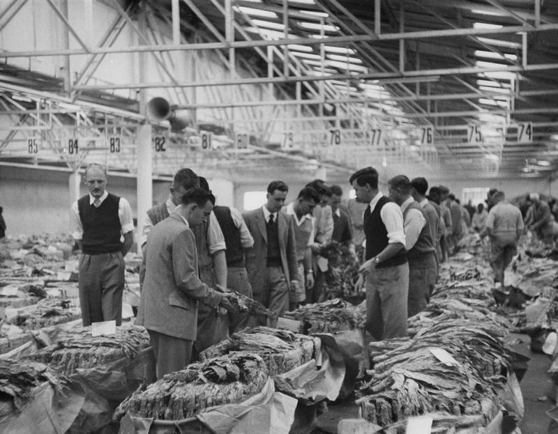 Black and white photograph of men at an indoor market looking at rows of dried tobacco leaves in bundles