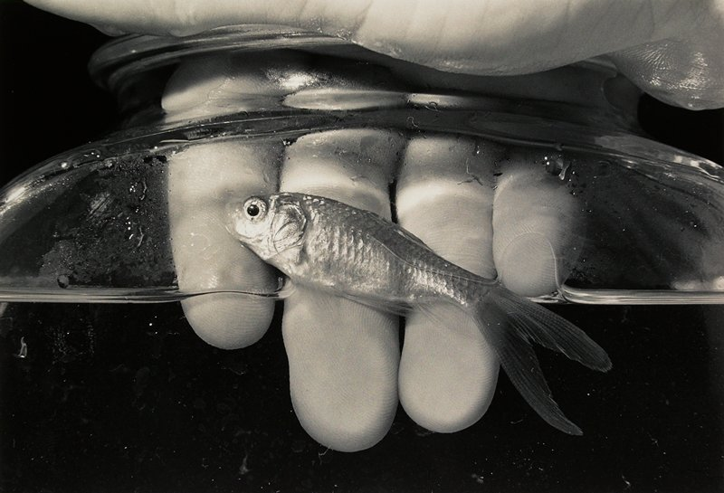 hand holding fish out of water