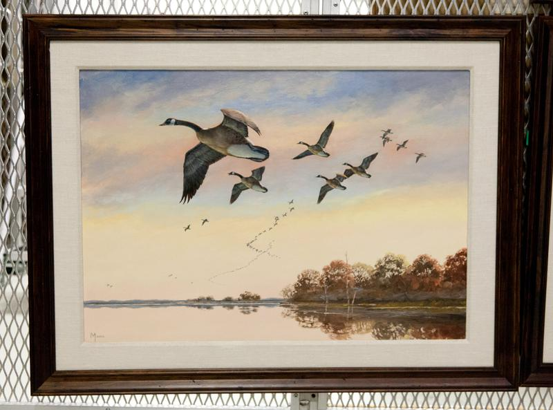 Animal. Bird. Fowl. Canada geese in flight against pale sky, trees and land to right.