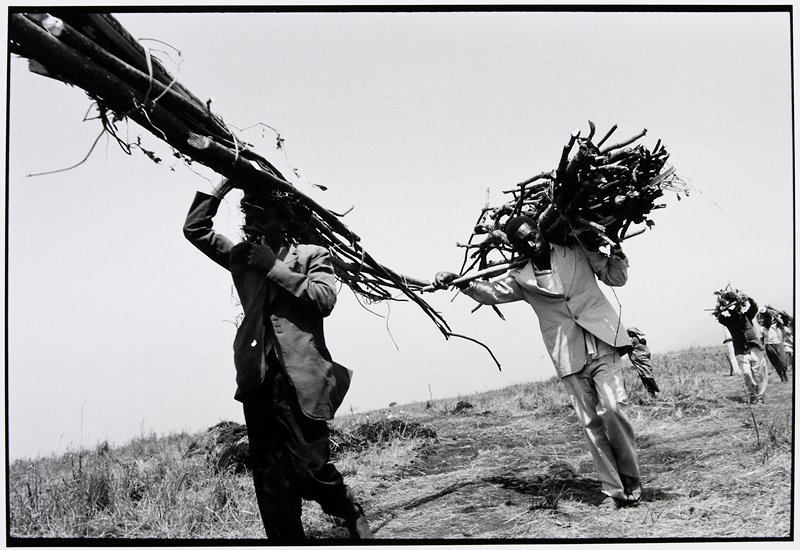 people carrying branches on their heads