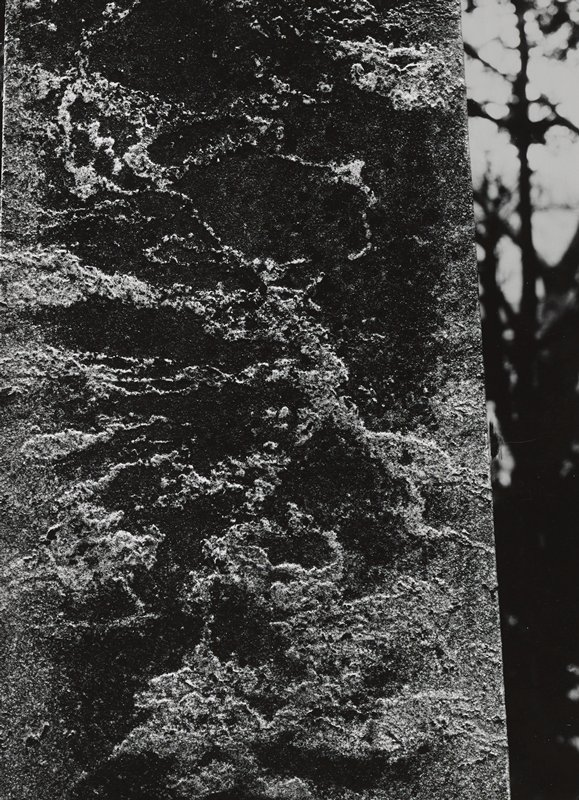 abstract image; tree trunk (?) or weathered element; silhouettes of tree branches at right