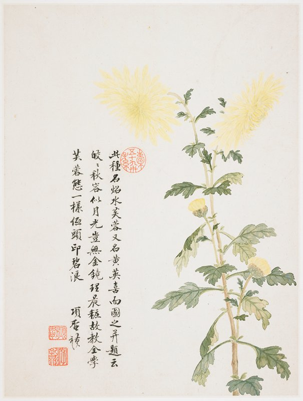 2 yellow mum flowers on top of a long, slender stem; 2 partially open buds below; inscription and 3 seals at left
