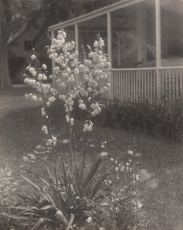blooming plant with 3 long stalks emerging from spiky foliage; porch in background