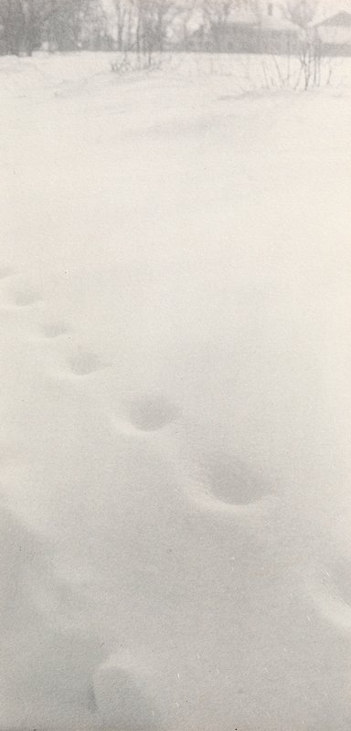 smooth snow with blown-over footprints; bare branches at top