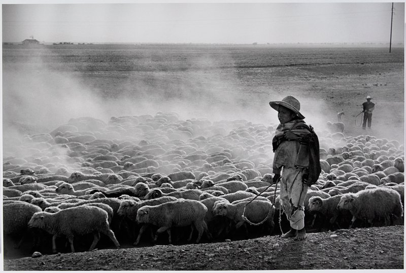 standing boy wearing a hat in front of a large herd of sheep; man with dog at L in background